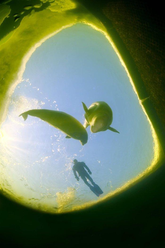 nadando-con-belugas_1329x2000_6c057f8b